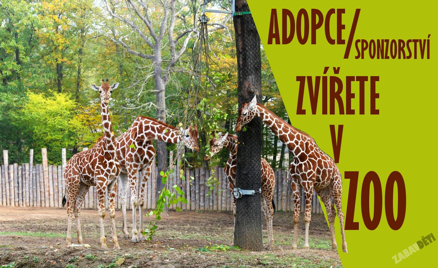 Adopce a sponzorství zvířete v ZOO