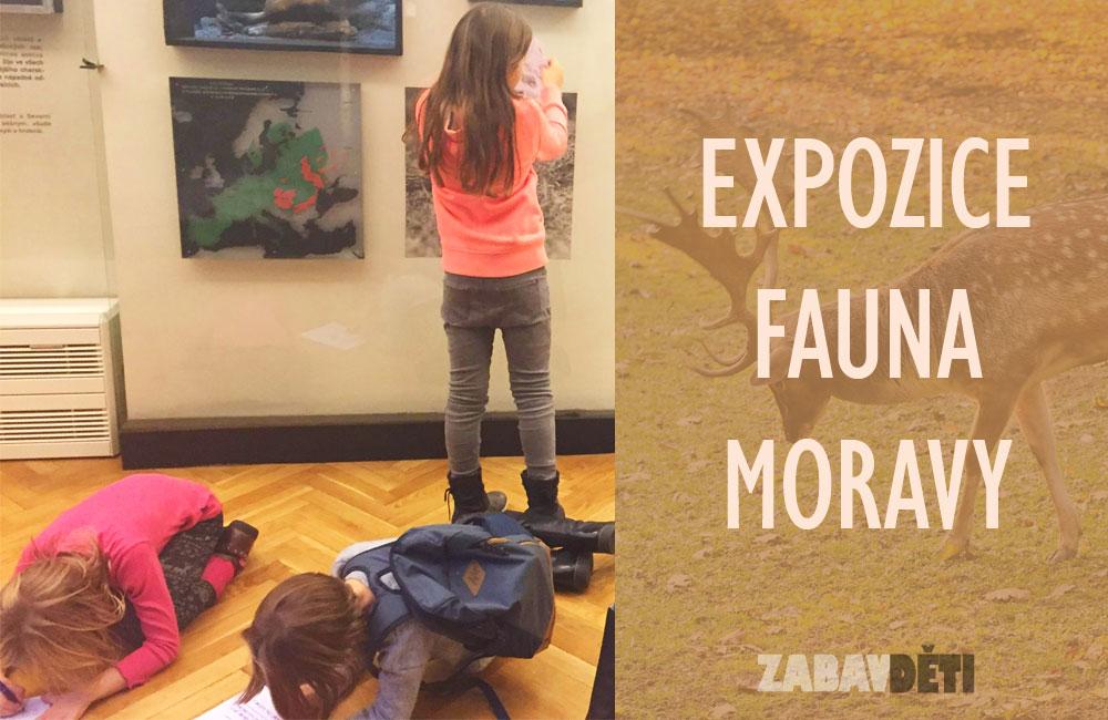 Expozice Fauna Moravy