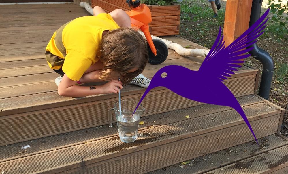 Kolibříci s nektarem