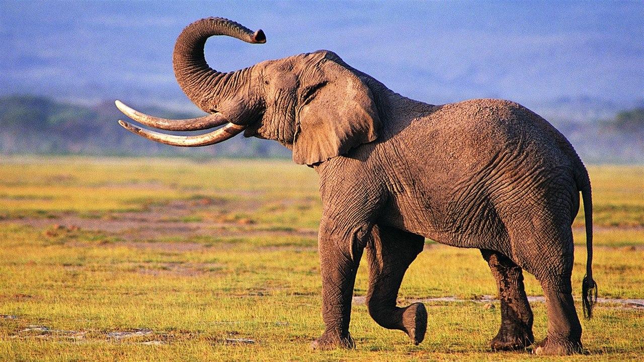 Sloní chůze